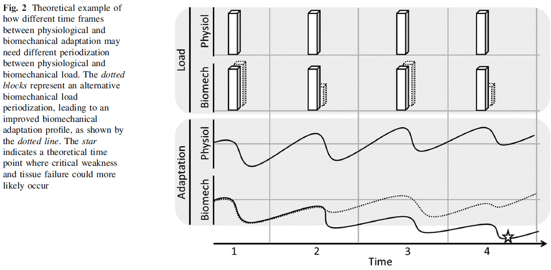 Theoretical example of how different time frames between physiological and biomechanical adaptation may need different periodization between physiological and biomechanical load.